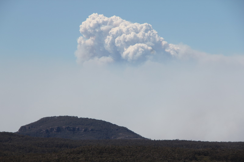 Yesterday's conflagration, tomorrows loneliness: a reflection on the 2019 Australian bushfires
