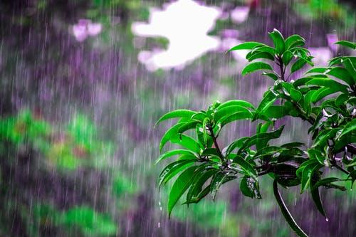 Rain's sweet embrace
